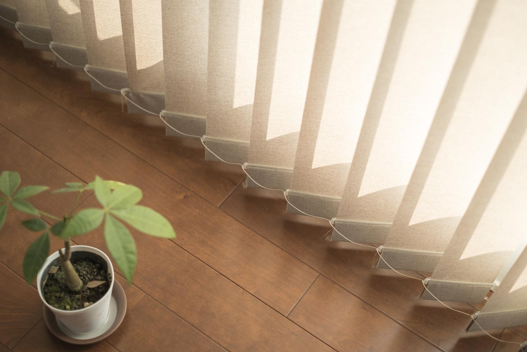 ブラインドと植木